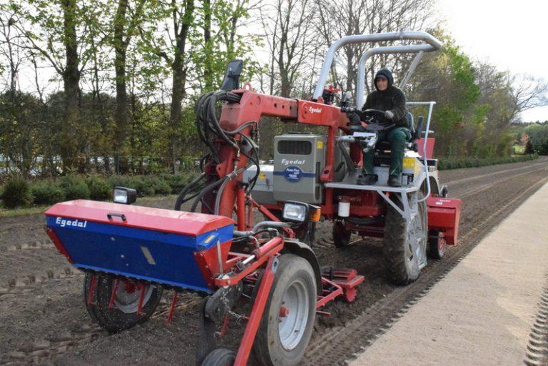 Aussaat Seed seeding Egedal Abies Nordmanniana Baumschule Engler