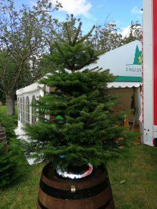 Premium Tanne / Weihnachtsbaum Produzent Langesoe 2019 Baumschule Engler