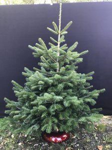 Weihnachtsbaumbörse Eslohe 2019 - Baumschule Engler Weihnachtsbaume Großhandler